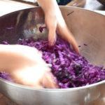 腸内環境を整える、乳酸発酵キャベツ作りませんか?