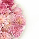 食用菊、もってのほか・・・ 12152016